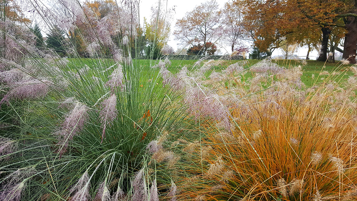 Lovely Ornamental Grasses Add Great Fall Interest