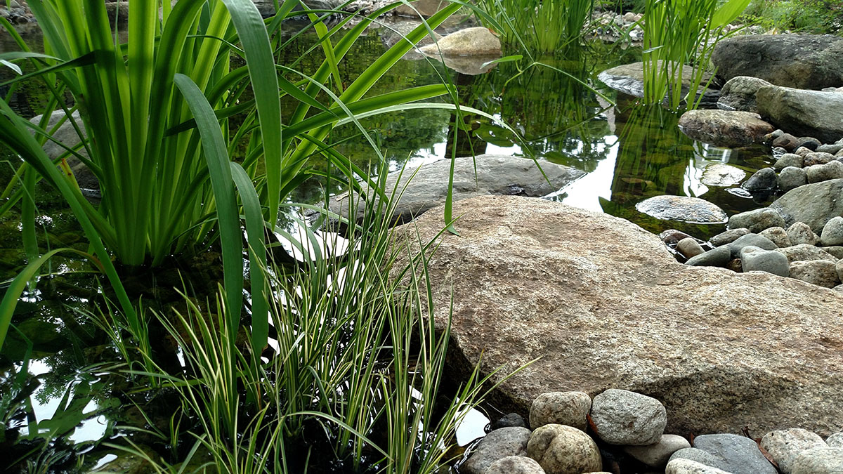 This Pond Was Inspired by the Idea of a Vernal Pool